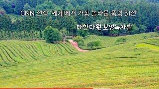 전남 보성녹차밭의 아름다운풍경,편백나무숲길,힐링산책길,…