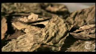 Salvia Divinorum - La droga de YouTube