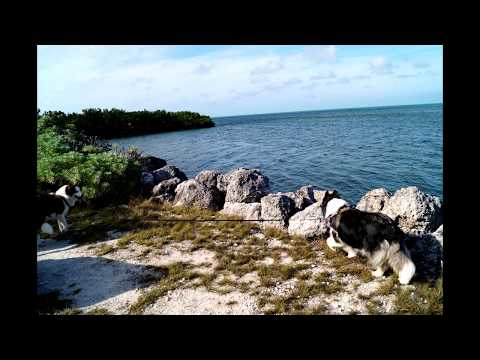 Crane Point Florida Keys (December 2014)