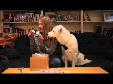 Sara & Hero Unboxing Video PetPrints 3D!