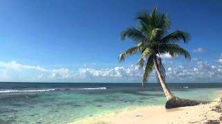 Relaxing 3 Hour Audio Of A Tropical Beach With Blue Sky White Sand And Palm Tree