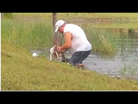 Video-shows-man-wrestles-dog-away-from-alligator-that-snatched-it