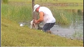 Video shows man wrestles dog away from alligator that snatched it