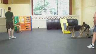 Leader Of The Pack Dog Training - Pack Therapy Session