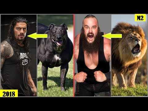 20 WWE WRESTLERS Who Look Alike ANIMALS - Roman Reigns, The Rock, Braun Strowman.. [HD]
