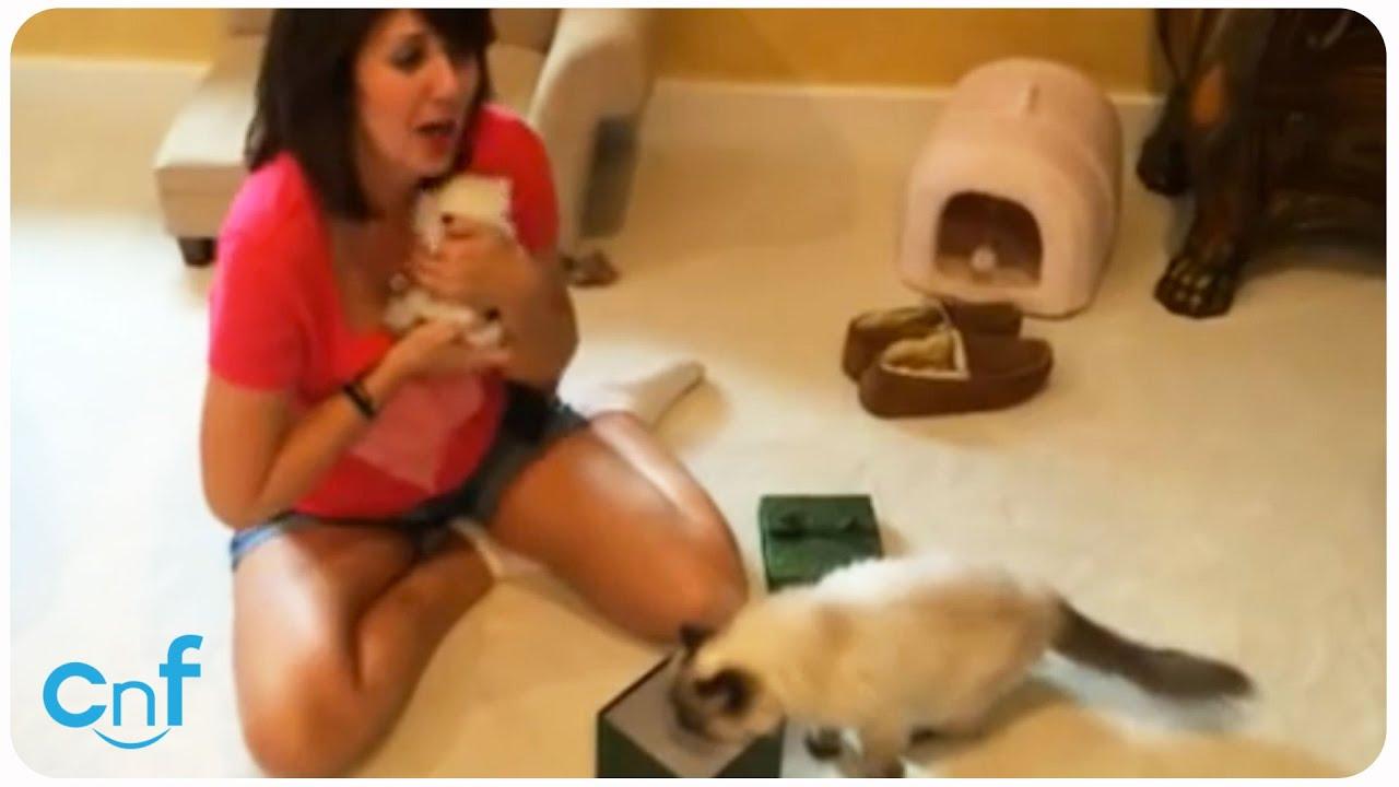 Kittens for Christmas | Kitten Surprise