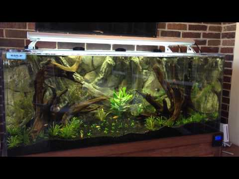 190 Gallon With All New Fish