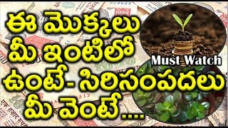 Lucky Plants for Your Home | Must Watch |