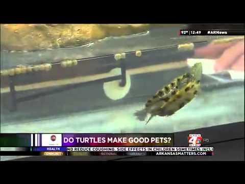 Do Turtles Make Good Pets?