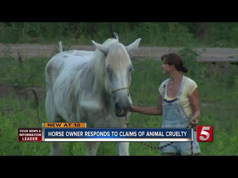 Horse And Carriage Owner Speaks Out Amid Viral Photo
