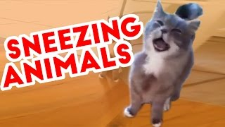 Try Not To Laugh At These Sneezing Pets & Animals of 2016 Weekly Compilation   Funny Pet Videos