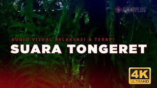 Gambar cover Audio Relaksasi Suara Hujan & Tongeret