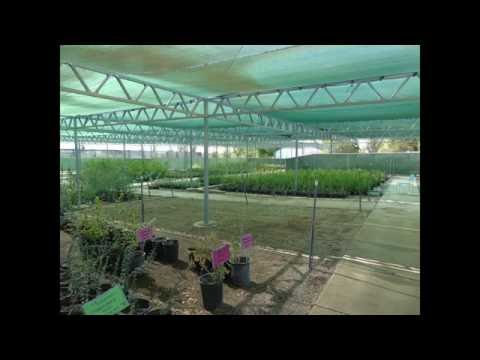 Las Vegas State Tree Nursery Revised