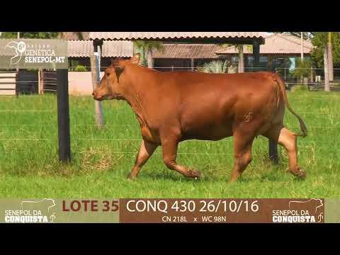LOTE 35 CONQ 430