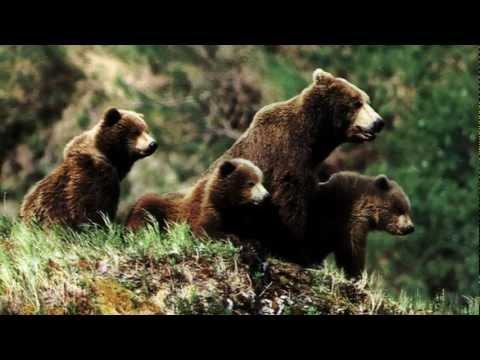 Пушкин А.С. - Сказка о медведихе.