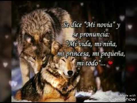 Poemas Y Frases De Lobos Mas Hermosos Del Mundo Youtube