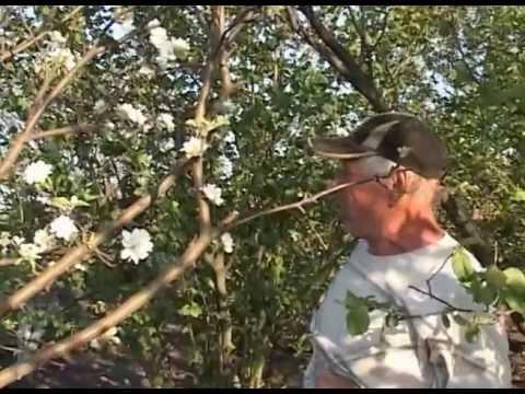 Жуки – вредители растений: фото насекомых-вредителей сада