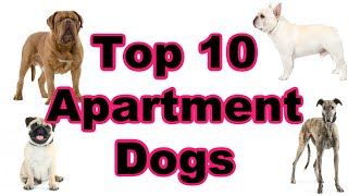 Top 10 Best Apartment Dog Breeds 2020