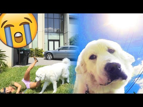 PRETENDING TO FAINT IN FRONT OF MY DOG - FUNNY REACTIONS (Super Cooper Sunday #139)