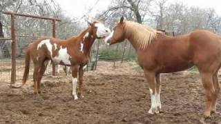 Fighting Horses #1  ~ Cash and Zackery 2010