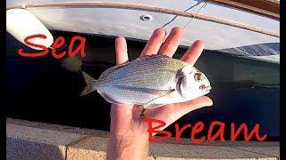 ORATA a Light Rock Fishing + Scorfani + Ghiozzi - Sardegna PARTE DUE