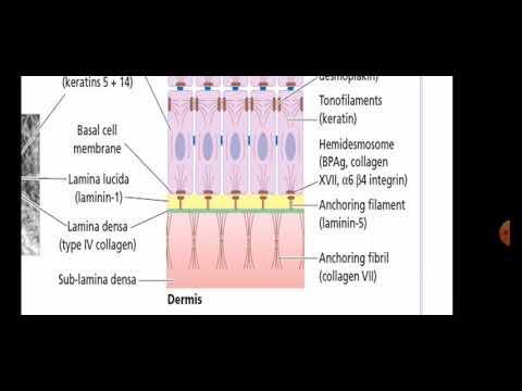 Dermatology Introduction Seminar By Dr Amer Al Homsi