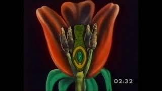 Flores com plantas vasculares
