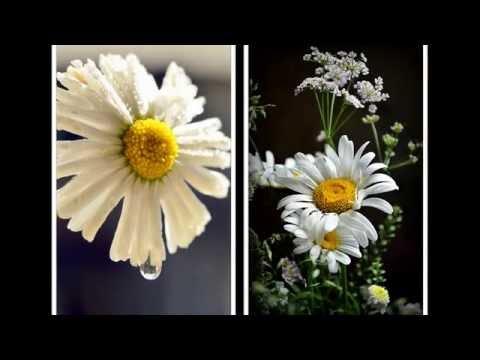 Цветы (фотографии Ирины Вахрушевой)