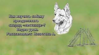 Как научить собаку преодолевать снаряд «лестница». Видео урок.