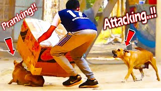 Serious Dog Prank Back Pranker Very Funny - Must Watch Most Funny Comedy Video Prank 2021