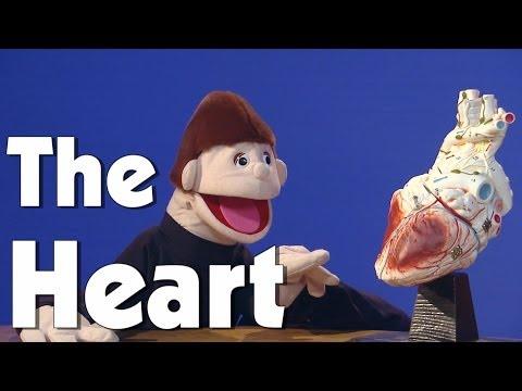The Heart | Kids Health | The Friday Zone | WTIU | PBS