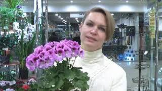 Центр Фиалки на ВДНХ