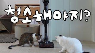 고양이 집사들에게 특화된 무선 청소기, 김명철 수의사가…