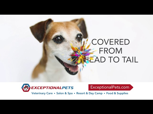 Exceptional Pets Cave Creek - March 7th and 8th!