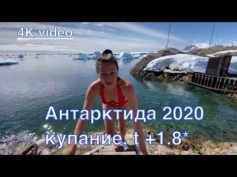 Антарктида 2020, купание с пингвинами.