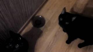 Кошки поют, когда им дают есть. А люди поют, когда им дают пить! ;)