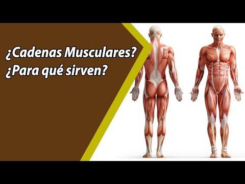 ¿cómo-trabajan-tus-cadanes-musculares,-y-qué-relación-tienen-con-el-dolor