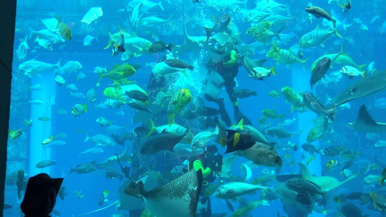 The Lost Chambers Aquarium Atlantis Hotel The Palm