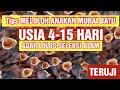 Meloloh Anakan Murai Batu Agar Tidak Mudah Mati  Mp3 - Mp4 Download