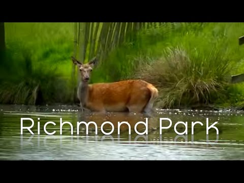 London - Richmond Park