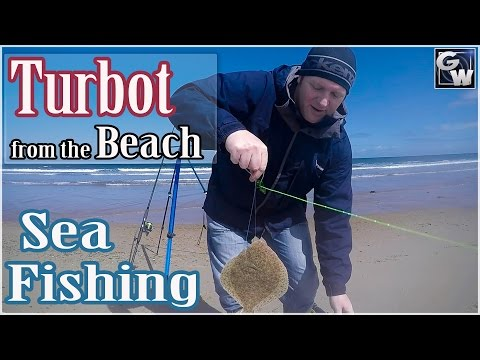 Fishing Druridge Bay - Turbot From The Beach.