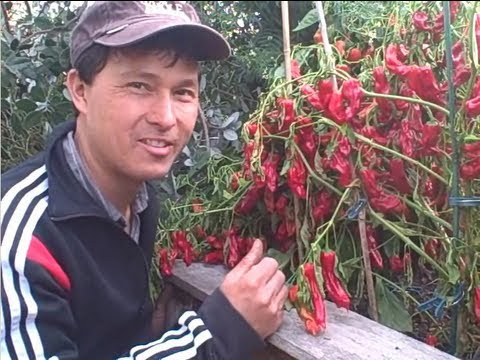 Fall Organic Garden Tour - How I grow Fruits and Vegetables