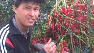 Fall Organic Garden Tour - How I Grow Fruits And Vegetables In The Front And Back Yard