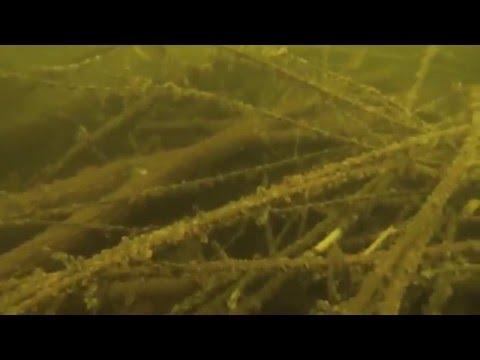 Cedar Lake Star Prairie Wi Fish Crib Research Ice Scuba Diving White Bass Crappie Sunfish Fishing
