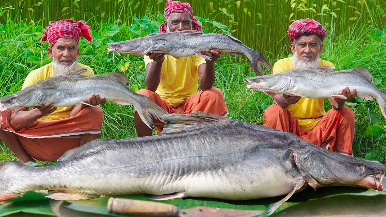 The Giant River-Catfish Cutting & Cooking - Expensive Ayer Fish Curry Recipe of Village Grandpa