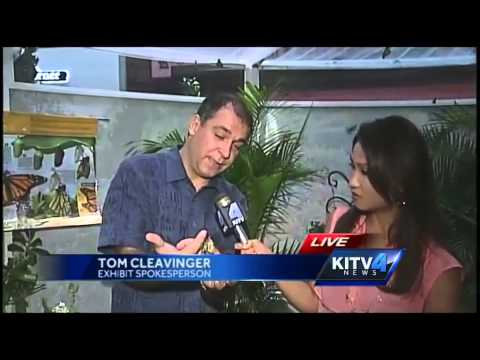 KITV Reporter Kissed By A Butterfly On Live Television!