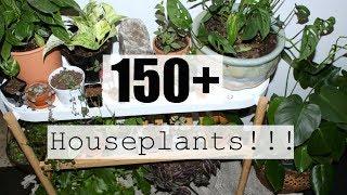 Houseplant Tour | Summer 2018 Houseplants