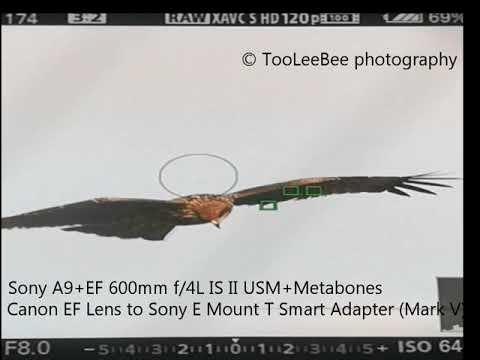 Sony A9+EF 600mm f/4L IS II USM+metabones mark V