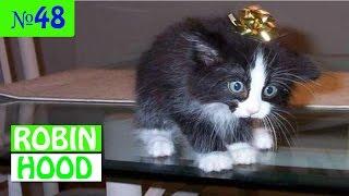 ПРИКОЛЫ 2017 с животными. Смешные Коты, Собаки, Попугаи // Funny Dogs Cats Compilation. Март №48