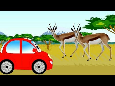 Влажные экваториальные леса Африки (джунгли): животные